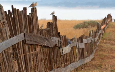 Property Line Issues – Good Fences Make Good Neighbors