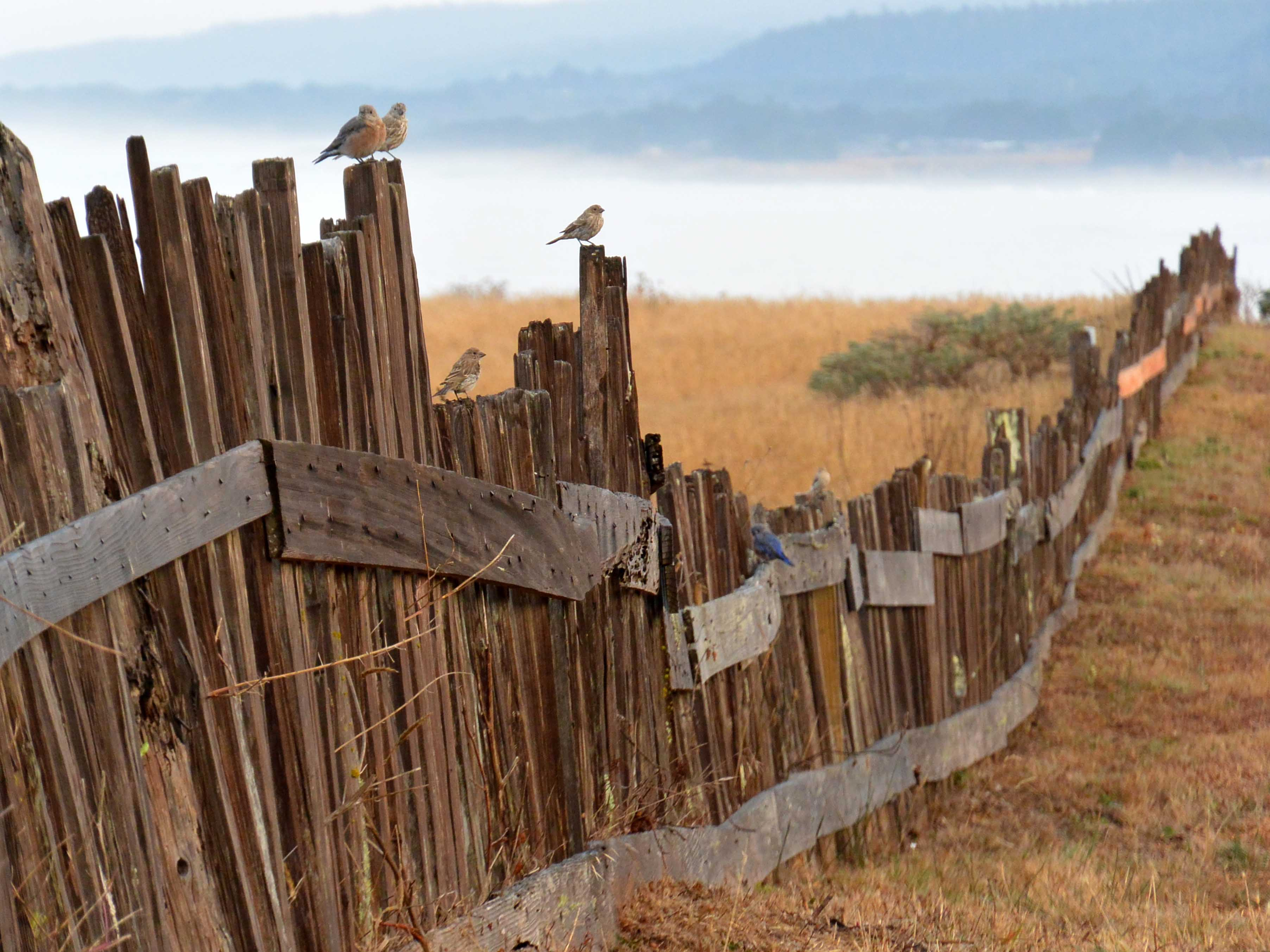 Property Line Issues - Good Fences Make Good Neighbors